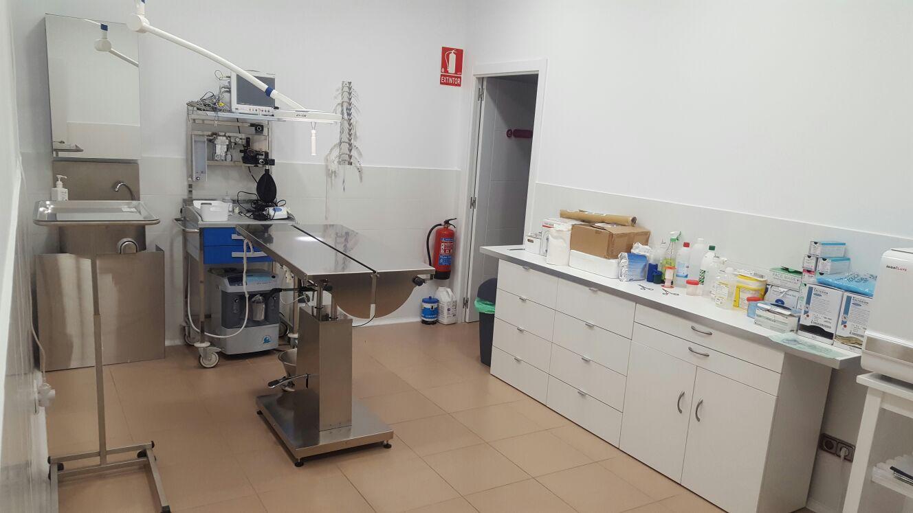 Cirugía Clínica Veterinaria Los Cachorros en Polígono de las Mercedes
